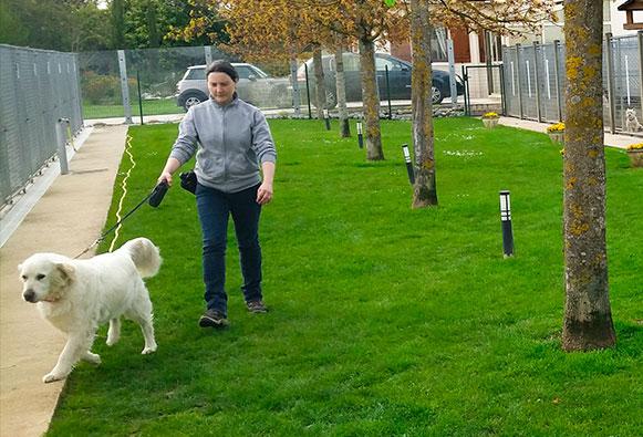 domaine-orphee-chien-promenade1