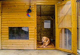 orphee-home-cabane-chien