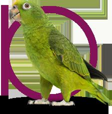 domaine-orphee-pension-nac-header-perroquet
