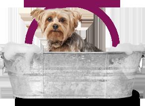 domaine-orphee-toilettage-header-chien